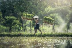 cambodia2