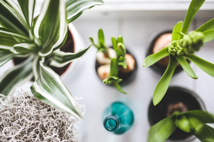 Houseplants: Turn Over a New Leaf